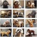 Shawnee Hills Pet Grooming