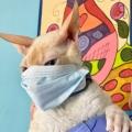 Wilton Manors Animal Hospital
