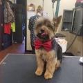 Doggy Designs Grooming Salon